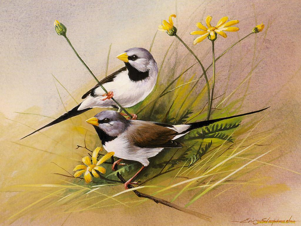 коллекция картинок птиц для